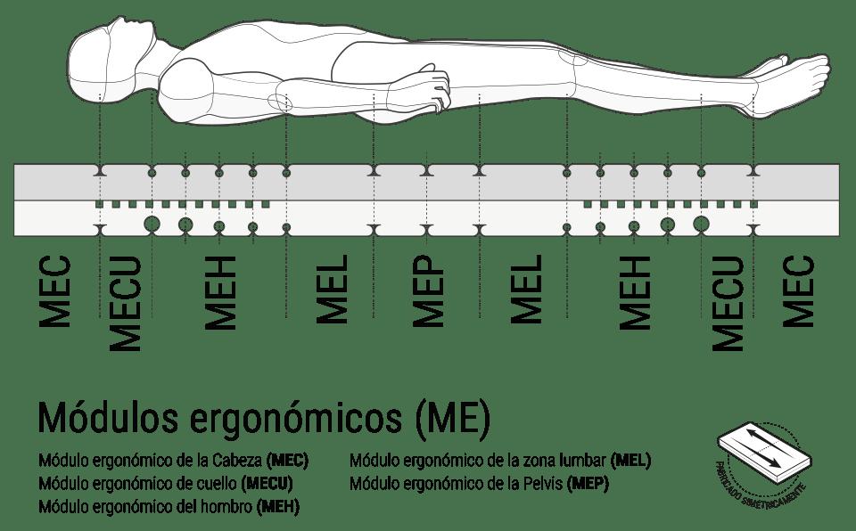 Ilustración: un cuerpo humano acostado sobre una sección transversal del colchón BODYGUARD con áreas de módulos ergonómicos marcados. Junto a él: simétricamente construido.