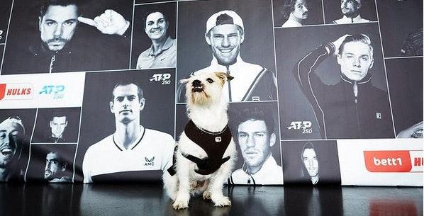 Zdjęcie: Pies Barnie, feelgood manager w bett1, na tle plakatu turnieju tenisowego bett1HULKS.